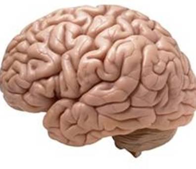 Brain-20140411161750_l