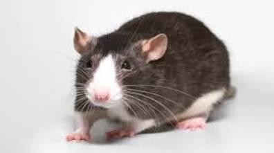 rat20140609154800_l