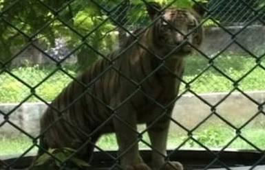 zoo20141103143725_l